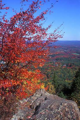 Bare Mountain Foliage View Poster