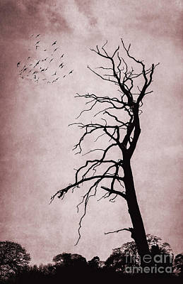 Bare Tree Poster by Svetlana Sewell