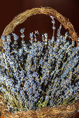 Basket With Lavender Flowers Poster by Erika Voloncs