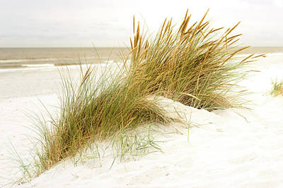 Poster featuring the photograph Beach Grass by Hannes Cmarits