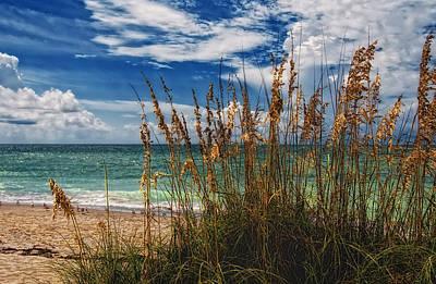 Beach Grass II Poster