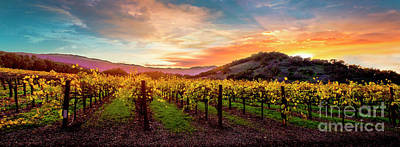 Morning Sun Over The Vineyard Poster