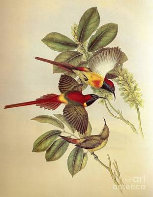 Bird And Flower Poster by Celestial Images