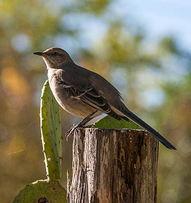 Bird On A Post Poster