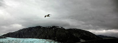 Poster featuring the photograph Bird Over Glacier - Alaska by Madeline Ellis