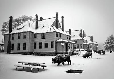 Bison Roaming Through Mammoth Hot Springs Poster by Neal Herbert
