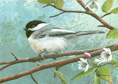 Black Cap Chickadee Poster by Mike Brown