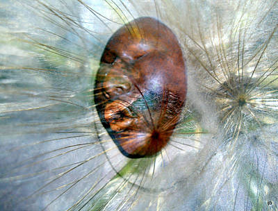 Blowing Dandelions Poster by Irma BACKELANT GALLERIES