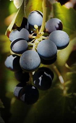 blue Grapes Poster by Werner Lehmann