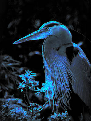 Poster featuring the photograph Blue Heron by Lori Seaman