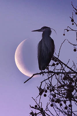 Blue Heron Moon Poster
