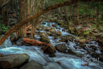 Bridalveil Creek In Shady Forest In Yosemite Poster