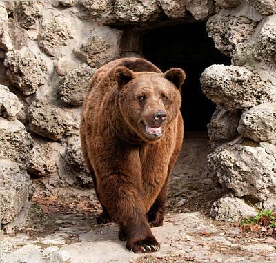 Brown Bear Poster by Boyan Dimitrov