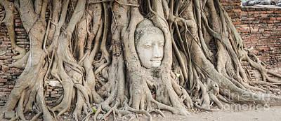 Buddha Head At Wat Mahatat Temple Poster