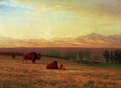 Buffalo On The Plains Poster