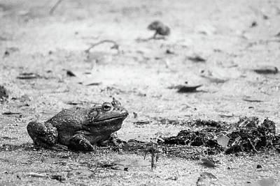 Bull Frog Poster