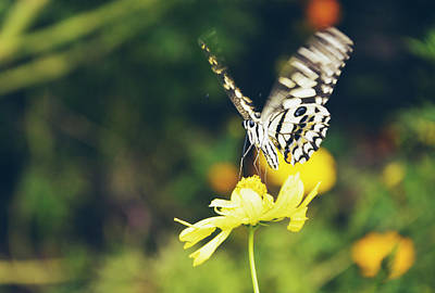 Butterfly On Flower Poster by Nguyen Truc