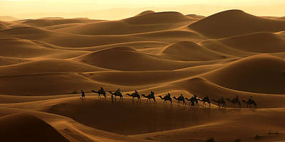 Camel Caravan In The Erg Chebbi Southern Morocco Poster by Ralph A  Ledergerber-Photography