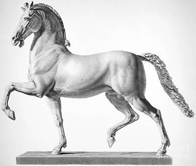 Canova: Horse Poster by Granger