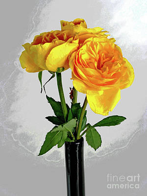 Captured Yellow Roses Poster