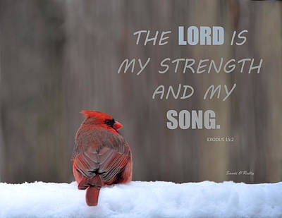 Cardinal In The Snowstorm With Scripture Poster