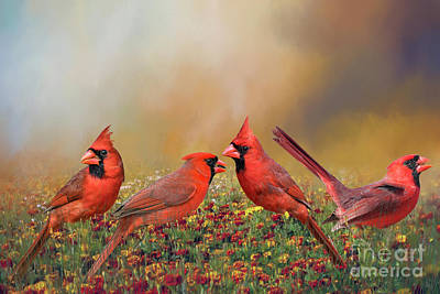 Poster featuring the photograph Cardinal Quartet by Bonnie Barry