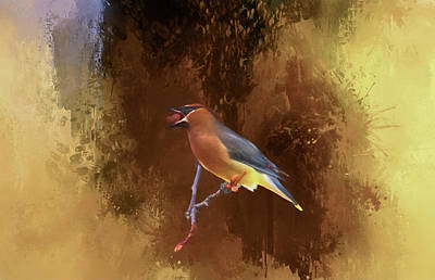 Cedar Waxwing Poster by Donna Kennedy