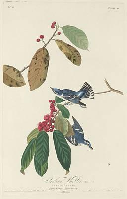 Cerulean Warbler Poster