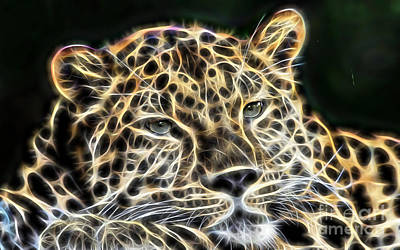 Cheetah Collection Poster