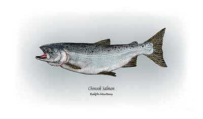 Chinook Salmon Poster by Ralph Martens