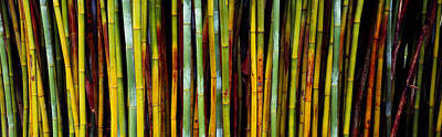 Close-up Of Bamboos, Kanapaha Botanical Poster by Panoramic Images