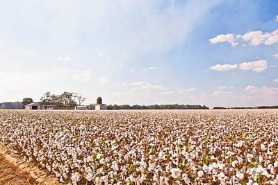 Cotton Field Poster by Scott Pellegrin