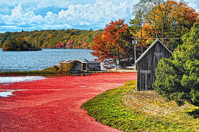 Cranberry Bog Poster by Gina Cormier