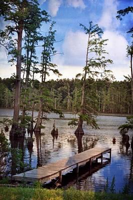 Cypress Swamp Poster