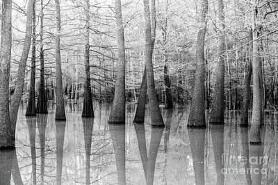Cypress - Tupelo Swamp North Louisiana Poster by Scott Pellegrin