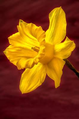 Daffodil Glow Poster