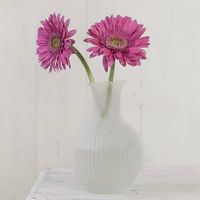 Poster featuring the photograph Gerbera Daisy Love by Kim Hojnacki