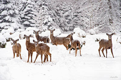 Poster featuring the photograph Deer In The Snow by Angel Cher