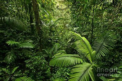 Dense Tropical Rain Forest Poster by Matt Tilghman