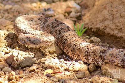 Desert Camouflage Poster