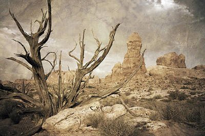 Poster featuring the photograph Desert Tree by Mike Irwin