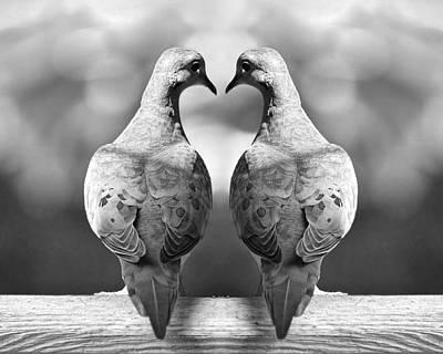 Dove Birds Poster