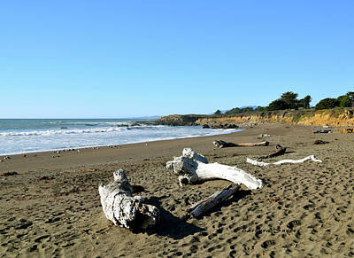 Driftwood On Moonstone Beach Poster by Barbara Snyder