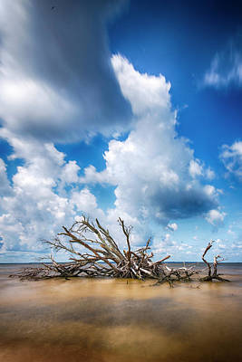 Poster featuring the photograph Driftwood Sky by Alan Raasch