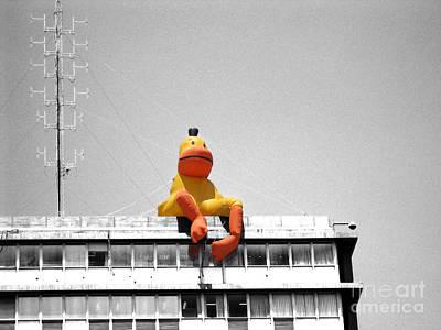 Duck View Poster by Stav Stavit Zagron
