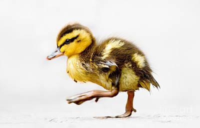 Duckling Parade Poster