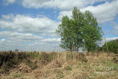Dutch Landscape, Nature Reserve Dwingelderveld Poster