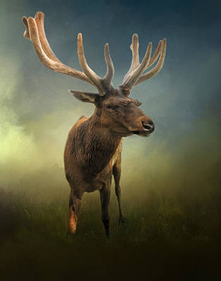 Elk Poster by David and Carol Kelly