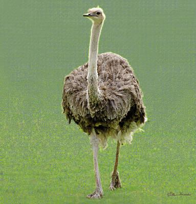 Emu Poster by Ellen Henneke