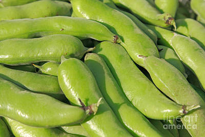 Fava Bean Pods Poster by Gaspar Avila